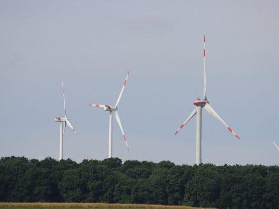 Windrad Wald 900 675